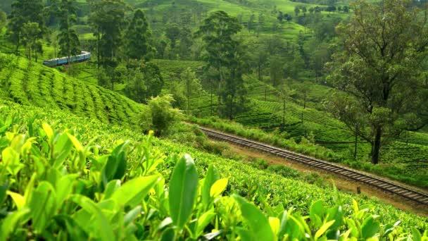 Srí Lanka - Vlak prochází čajovou plantáží. Rozlišení 4K.