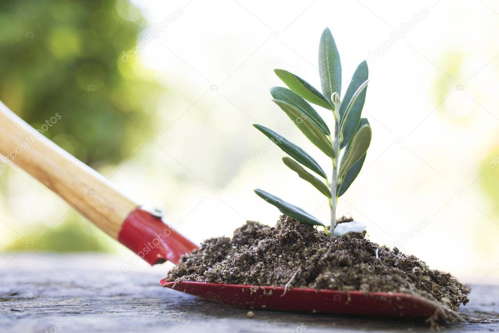 garden shovel with plant or sapling