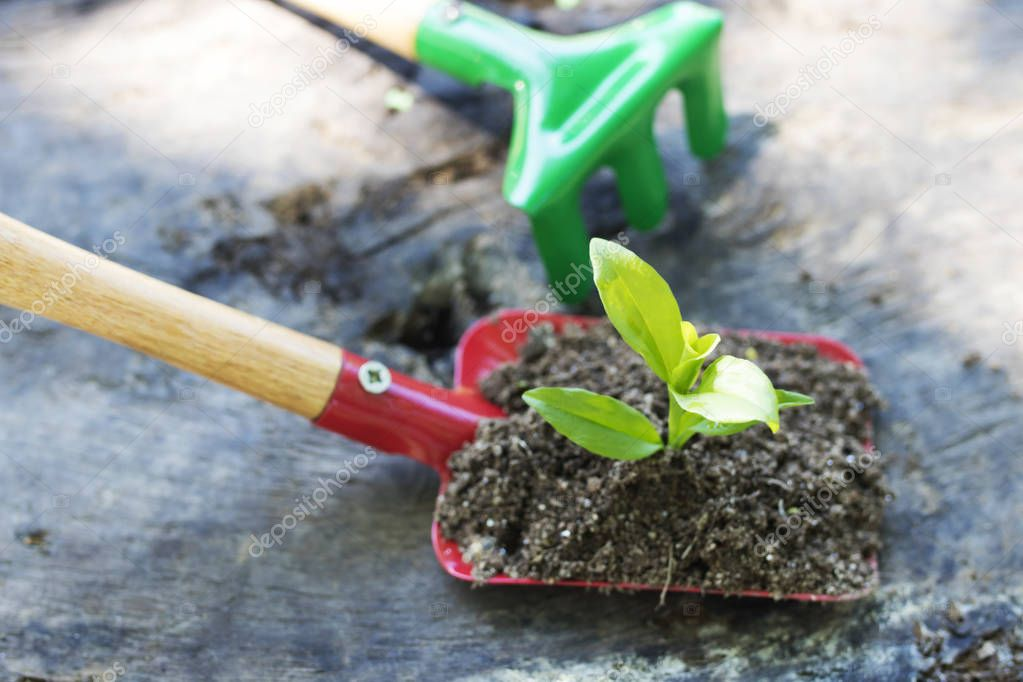 gardening tools and young potted plant