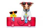 utazótáska-val sárga műanyag kacsa, csomagtér tetején kutya