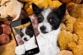Hund ruht bei einer Siesta auf seinem Bett mit seinen Teddybären, müde und schläfrig, macht ein Selfie mit Smartphone oder Telefon