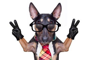 business boss dog