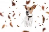 pes a majitel s pólem na podzim