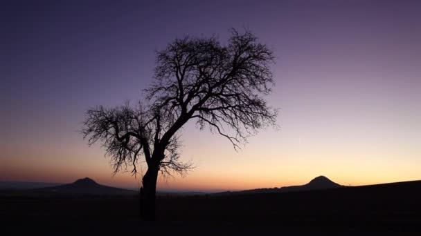 Osamělý strom v České středohoří, Česká republika. Pohoří se nachází v severních Čechách je centrální Českým středohořím nebo středohoří. Rozsah je zhruba 80 km dlouhý
