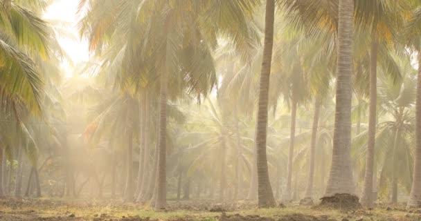 Kokosový strom na polích Kerala Indie