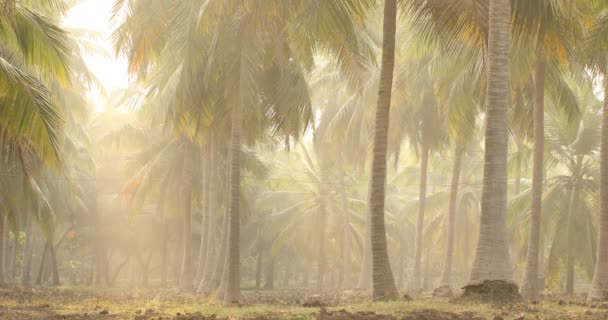 Kokosnussbaum auf Feldern Kerala Indien