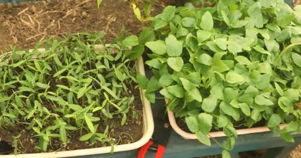 Mateřské rostliny a trávy