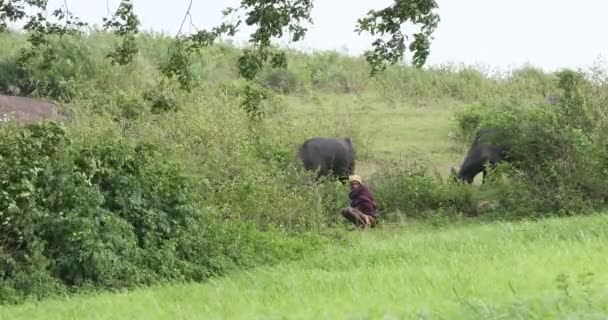 Tribal People at a fields Araku Valley Andhra Pradesh India 25th May 2020