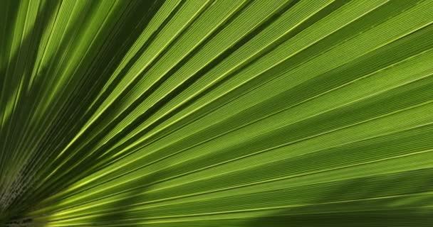 Gyógyszeres Leaf makró lövés