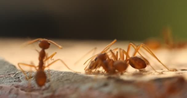 Macro shot of the Ants