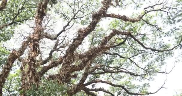 Obrovský strom větví detailní