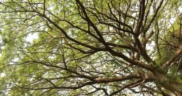 Obrovské větve stromu detailní up