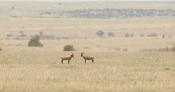 Víz buck Masai Mara Kenya Afrika