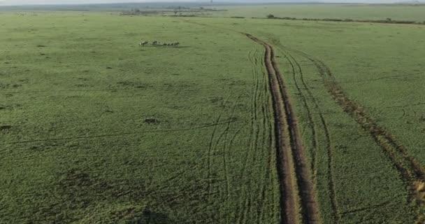 Letecký pohled na zebry v keňské keňské Africe