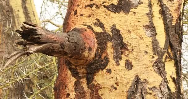 Tree Trunk texture macro shot