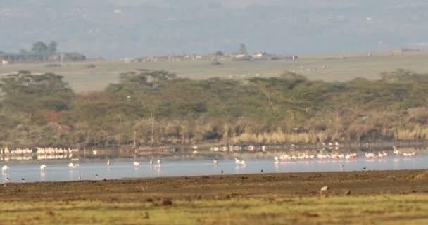 Flamingo Birds On Lake In Kenya Africa