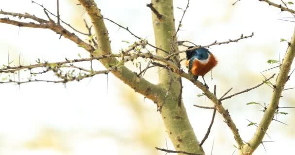 Birds In Masai Mara Kenya Africa