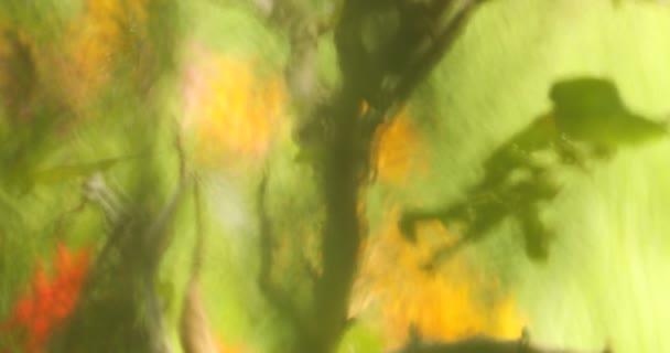 Mikrosnímek rozmazaných listů
