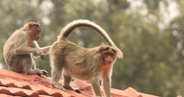Opice v domácnosti