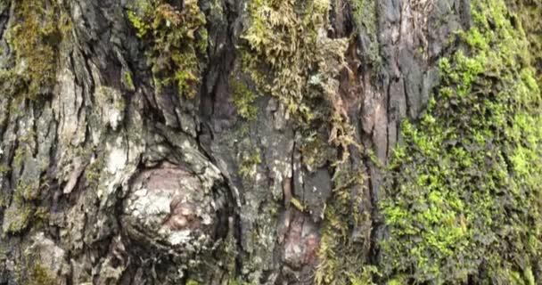 Makroaufnahme der Baumstammtextur