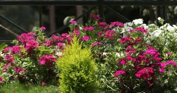 Květiny v botanické zahradě