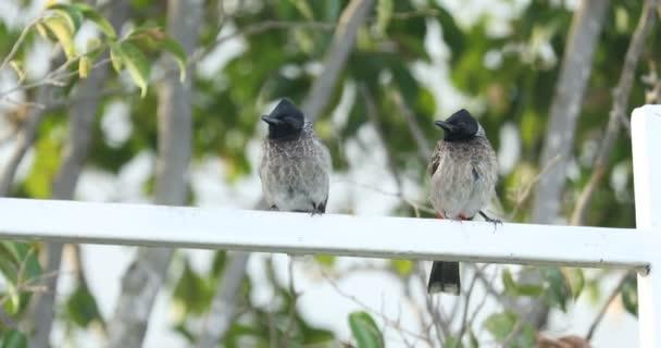 zaostřená z hladového ptáka