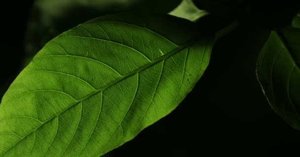 Mikroaufnahme der Blätter in der Nacht