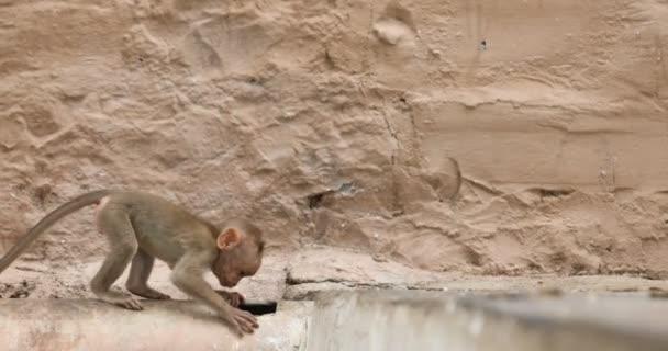 Opice s dítětem na zdi chrámu