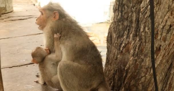 Majom és Baby a Templomfalon