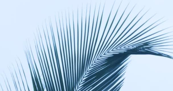 Kókuszdiólevél sziluettje