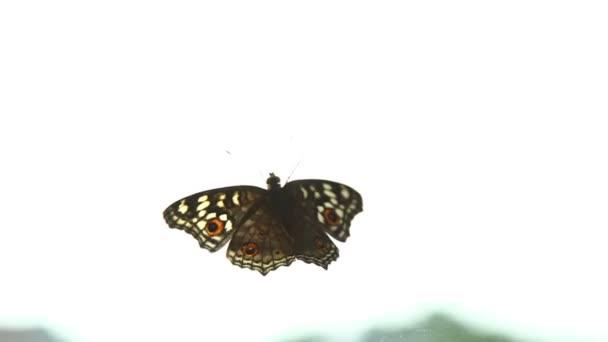 Pillangó egy üvegen