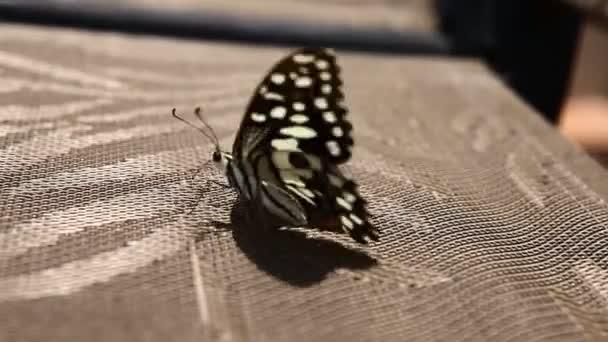 egy pillangó közelsége