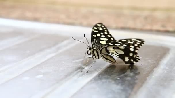 detailní záběr motýla