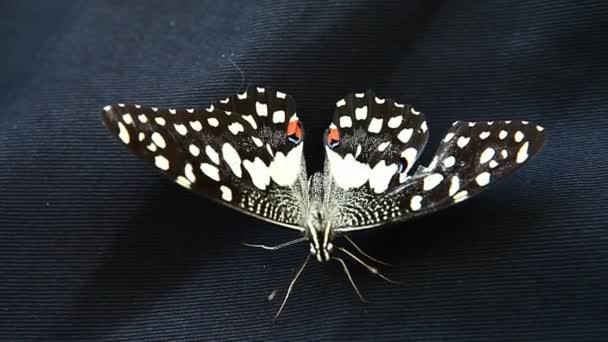 closeup motýla