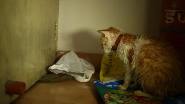 macska játszik -ban otthon