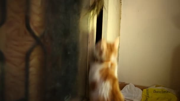 cat playing in the home