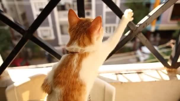 Macska nézi forgalom keresztül Iron Grill