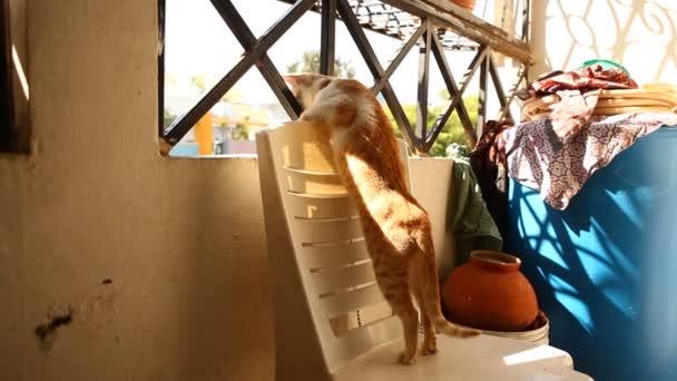 Cat watching Traffic Through Iron Grill