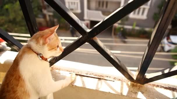 Detailní záběr hnědé kočky