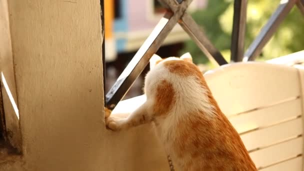Szoros kép egy barna macska