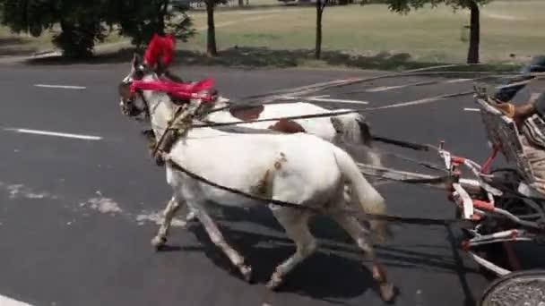 Kočár na koni na silnici Hyderabad Indie