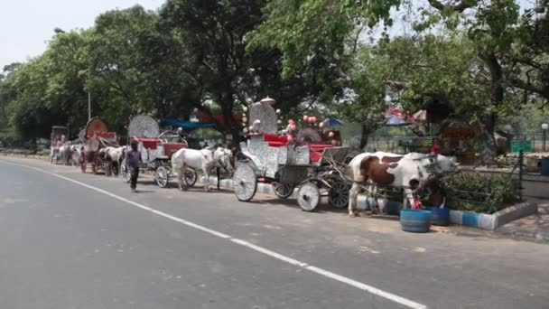 Horse Cart riding on road Hyderabad India