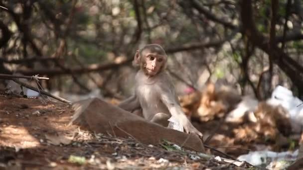 Detailní záběr na opici