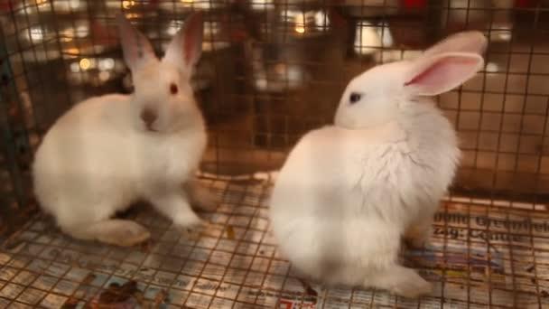 Kaninchen essen im Käfig