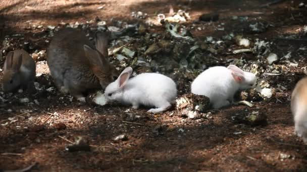 Hasen fressen auf dem Rasen