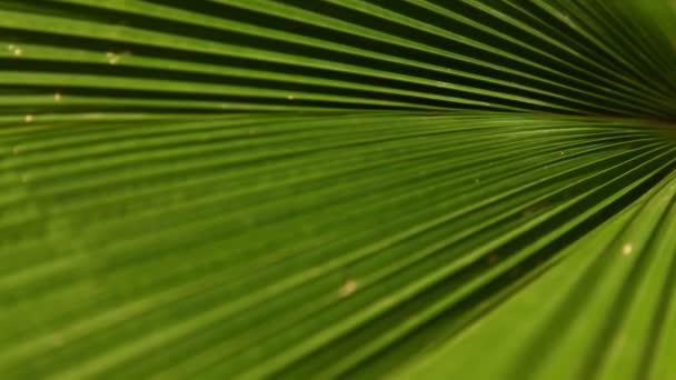 Leaf Texture Macro shot