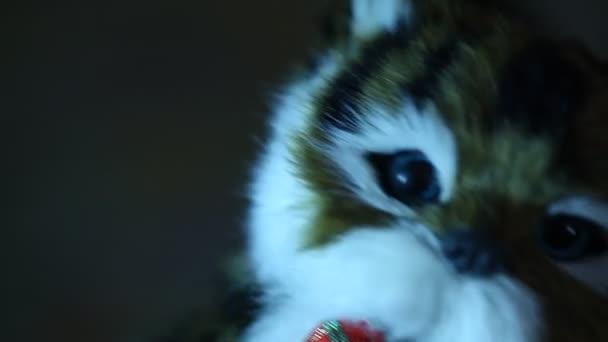 Brown Cat Doll Dancing