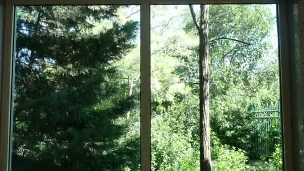 Okno přirozený les