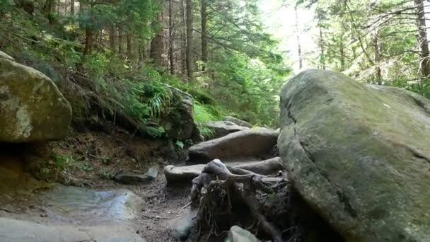 Lesní přírodní stone mountain