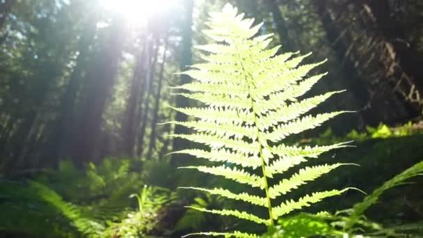 Sun lesní rostliny stromy